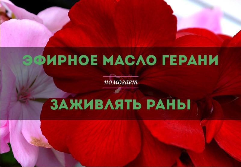 efirnoe-maslo-gerani-dlja-zazhivlenija-ran-kupit-01.jpg