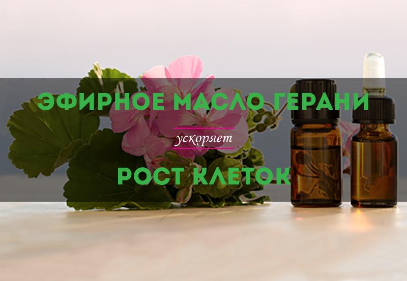 efirnoe-maslo-gerani-uskorjaet-rost-kletok-01.png