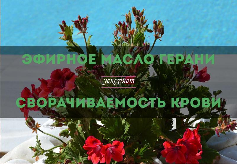 efirnoe-maslo-gerani-uskorjaet-svorachivaemost-krovi-01.jpg